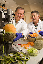 ARS plant pathologists peel melons for tests of quality and shelf stability after the melons are cut: Click here for full photo caption.