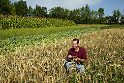 Soil scientist examines a research plot of barley interseeded with red clover: Click here for full photo caption.