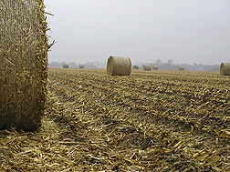 Photo: Bales of corn stover in a field. Link to photo information
