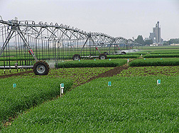 Linear irrigation system applies water on barley and sugar beet crops: Click here for photo caption.