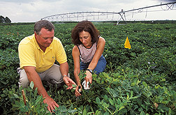 Agricultural economist and plant physiologist check crop water-use sensors used in irrigation scheduling methods developed at the ARS National Peanut Research Laboratory: Click here for full photo caption.