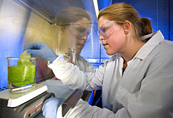 Research assistant inoculates a lettuce leaf with E. coli O157:H7 in a biological safety cabinet: Click here for full photo caption.
