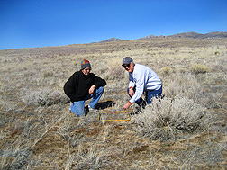 At a test site in Bedell Flat, north of Reno, Nevada, geneticist (left) and ecologist count early emergence of cheatgrass seedlings to determine whether a high-density year is ahead for cheatgrass: Click here for full photo caption.