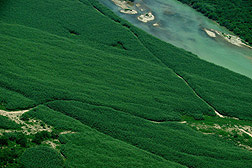 Aerial view of Arundo near Eagle Pass, Texas, along the Rio Grande: Click here for photo caption.