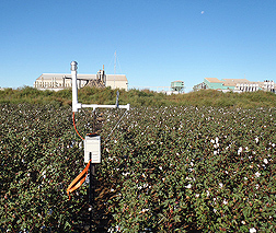 ARS scientists measure the levels of PM2.5 and PM10 in the air outside a cotton gin by surrounding the gin with 126 ambient air samplers, such as this one located in a cotton field near a cotton gin in west Texas: Click here for photo caption.