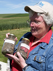 At a field day event in Pullman, Washington, a soil scientist uses canning jars to illustrate the greater volume of larger sized clumps of soil found in direct-seed soil compared to soil tilled multiple times: Click here for full photo caption.