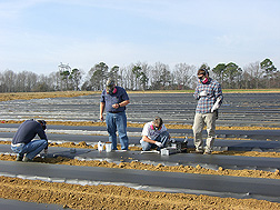 In a fumigated, tarped field in Tifton, Georgia, (left to right) horticulturist, plant pathologist, and technicians collect soil and air samples for analysis of chemical fumigants: Click here for full photo caption.