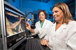 Plant pathologist Sally Stetina (left) and technician Kristi Jordan examine cotton roots with a microscope to determine the level of infection by reniform nematode: Click here for full photo caption.