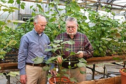 Agronomist Jack McCarty (left) and geneticist Johnie Jenkins study one of the cotton lines that resist root-knot nematode: Click here for full photo caption.