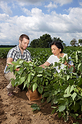 Tara VanToai, retired ARS plant physiologist, and Thomas Doohan, a student at Ohio State University, collect soybean plants and root samples to analyze them for response to flooding stress: Click here for photo caption.