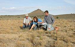 After junipers were removed on this field near Burns, Oregon, rangeland scientist Tony Svejcar (left), technician Lori Ziegenhagen, and plant physiologist Jeremy James examine the establishment of bluebunch wheatgrass as part of research to improve range restoration: Click here for photo caption.