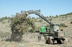 A slash bundler harvesting device being used to harvest a whole juniper tree: Click here for full photo caption.