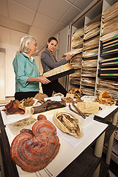 Research leader Amy Rossman (left) and collections manager Shannon Dominick pull some of the million-plus specimens in the U.S. National Fungus Collections: Click here for full photo caption.