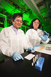 Research leader Pina Fratamico (right) and retired chemist Marjorie Medina perform an assay on a sample from an agar medium presumed to contain STEC bacteria: Click here for photo caption.