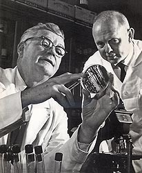 John L. Etchells (on the left) led the ARS food science laboratory in Raleigh, North Carolina, from 1937 until 1975. Etchells is shown here conferring with Tom Bell, research leader of the lab from 1975 to 1977.