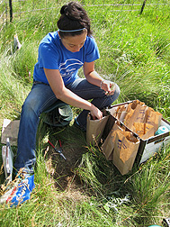 Student intern Allison Haider samples vegetation in the same pasture in 2013.
