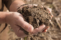 Photo: Hands holding soil. Link to photo information