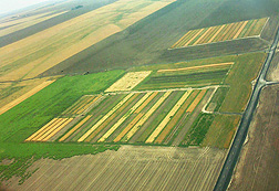 ARS scientists at Pendleton, Oregon, developed a soil carbon model called CQESTR to estimate how climate change will affect soil organic carbon stocks in research plots like this one in Ralston, Washington.