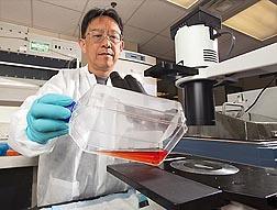 Photo: ARS chemist Thomas Wang prepares to examine human cells. Link to photo information