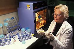 Chemist Marie Tousignant prepares a membrane for nonradioactive dot-blot hybridization.