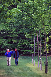 Plant geneticist and gardener observe growth of young American elm selections.