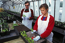 Horticulturist Bentz and gardener Abell plant cuttings from disease tolerant elms