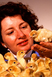 Poultry physiologist Ann Donoghue