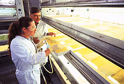 An insect rearing room. Click here for full photo caption.