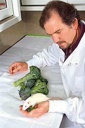 Nutritionist John Finley holds one of the rats and a sample of the enriched broccoli.