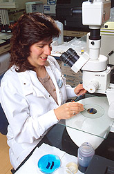 Nutritionist Cindy Davis prepares to count the number of precancerous lesions in tissue from the intestines of a rat. Link to photo information.