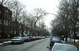 Asian longhorned beetle infestation in Chicago: before cleanup. Link to photo information.