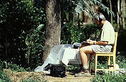 Entomologist Michael Smith listens and records sounds produced by Asian longhorned beetle larvae as they feed within an infested tree. Link to photo information.