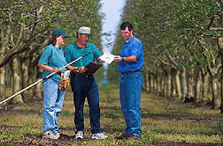 Technician, entomologist, and field development manager inspect a trap baited with pear ester: Click here for full photo caption.
