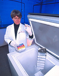 Biologist obtains isolate of Campylobacter from an ultra-low-temperature freezer: Click here for full photo caption.