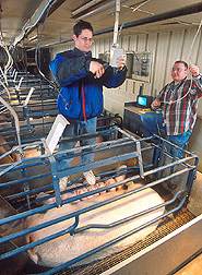 Technician and support scientist connect video equipment to record sow and piglet behavior: Click here for full photo caption.