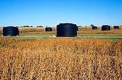 Photo: Six-thousand-gallon water tanks are used to simulate farm ponds in the recirculating subirrigation/drainage system. Link to photo information