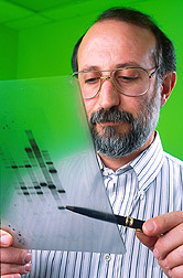 Molecular biologist examines autoradiographic data: Click here for full photo caption.
