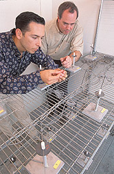 Entomologist and graduate student attach a moth to a flight mill: Click here for full photo caption.