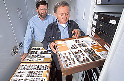 Two entomologists discuss the importance of leaf-footed bugs: Click here for full photo caption.