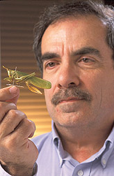 Entomologist holding a katydid: Click here for full photo caption.