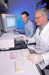 Two entomologists examine ELISA plates: Click here for full photo caption.