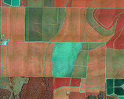 Photo: Aerial image of a farm in Mississippi showing the type of crop or vegetation in the area. Link to photo information