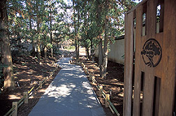 A walkway at the Bonsai and Penjing Museum: Click here for full photo caption.
