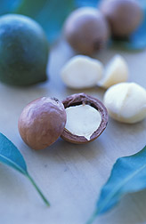 Macadamia nuts: Click here for full photo caption.