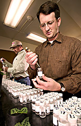 Biologist and technician test for herbicide-resistant weeds: Click here for full photo caption.