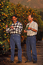 ARS horticulturalist and professor at UC Riverside discuss genetic diversity of a citrus accession: Click here for full photo caption.