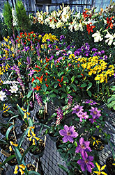 Flowers and ornamentals: Click here for full photo caption.