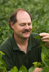 Plant pathologist inspects soybean plants for disease symptoms that resemble rust: Click here for full photo caption.