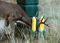 Photo: A deer feeding at a bait station pushing his head through rollers that apply a tick control. Link to photo information