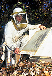 Technician examines Varroa trap board. Click here for full photo caption.